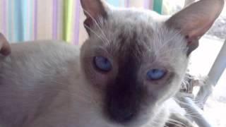 Festejando el Día Internacional del Gato
