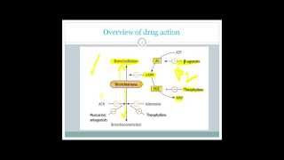 drugs used in bronchial asthma for usmle step 1