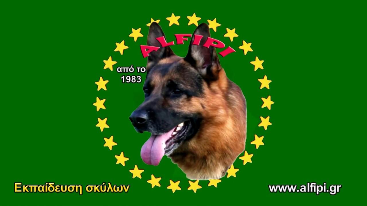 Εκπαίδευση σκύλων Γερμανικών ποιμενικών Εύβοια