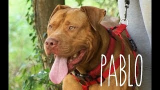 Looking for a Home - Pablo - Rescue Remedies Dog Rescue