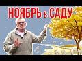 Садовые работы в ноябре / Игорь Билевич