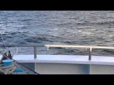 Double Eagle Deep Sea Fishing 1.1
