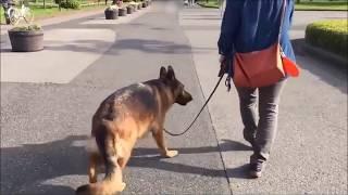お散歩の引っ張りや他犬への興奮についてご相談いただきました。 ------...