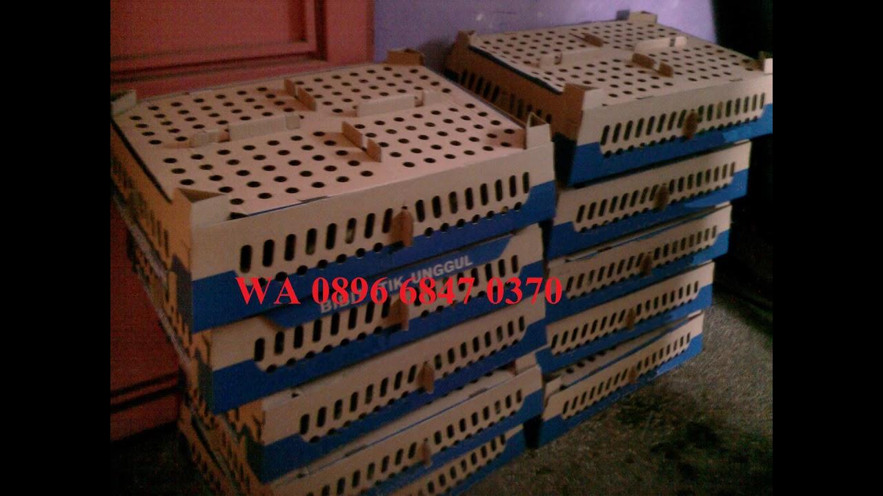 WA 0896 6847 0370 Jual Bibit Bebek Semarang Solo Di Bekasi