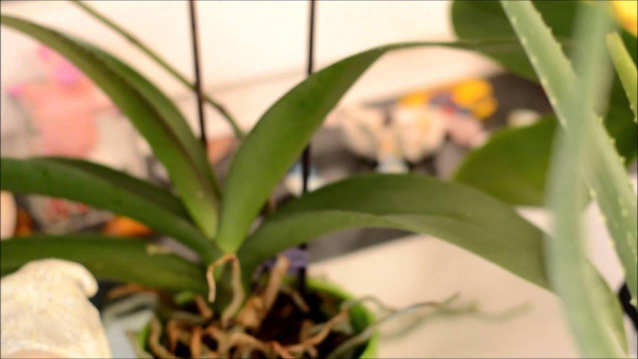 pflegeleichte zimmerpflanzen meine top 3 youtube. Black Bedroom Furniture Sets. Home Design Ideas