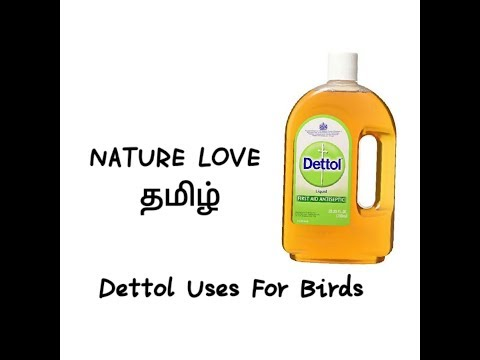 Dettol uses for lovebirds