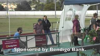 Bendigo Bank Sponsors Greyhound Puppy Auction