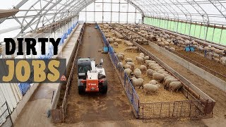 A Week in the Life of a Sheep Farmer (SO MANY DIRTY JOBS!): Vlog 160