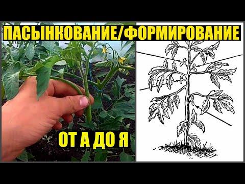 Как я пасынкую и формирую томаты / Обзор томатов