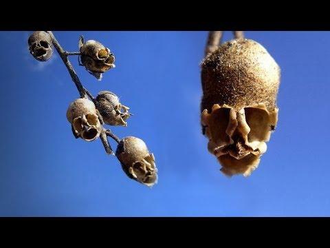 Андрей Скляров: О животных формх в растительном мире