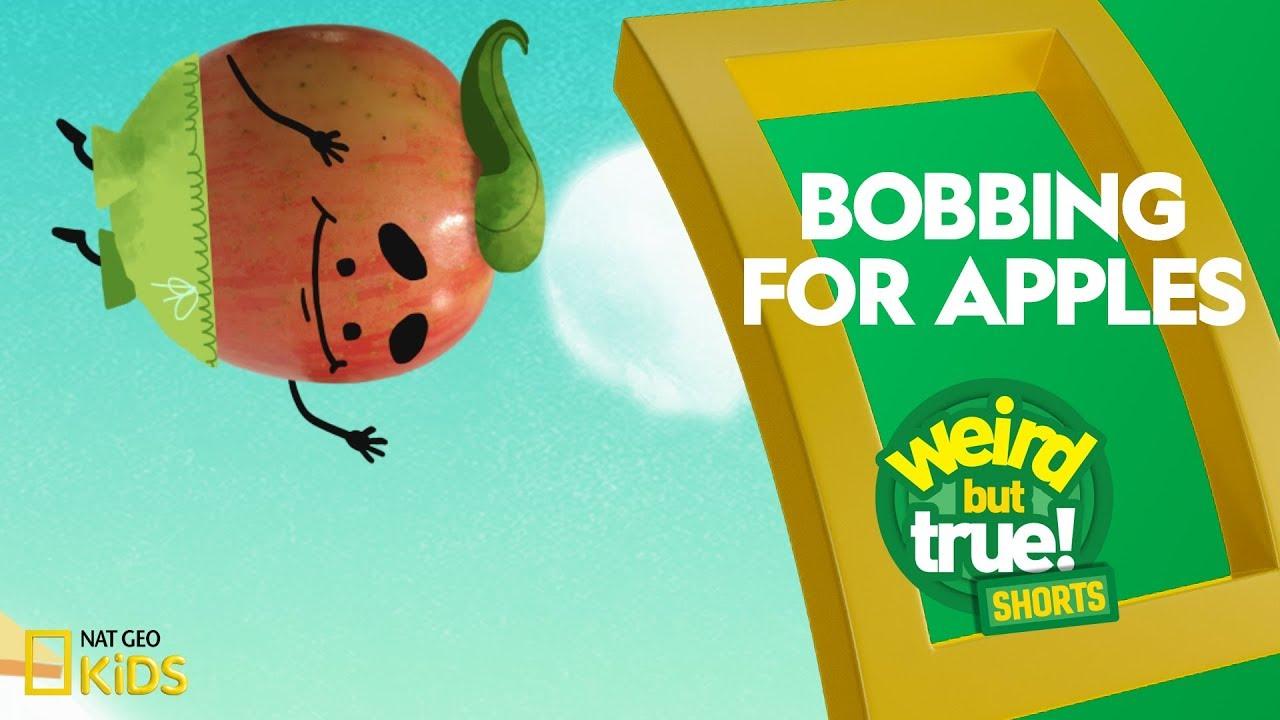 Bobbing for Apples | Weird But True! Shorts