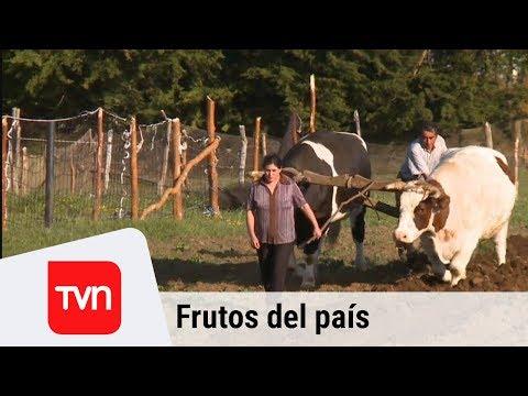 Frutos del País - Linlín