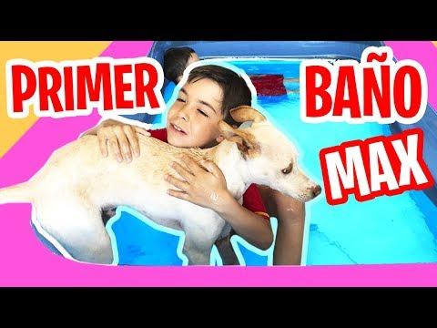 PRIMER BAÑO De MAX En La PISCINA 💦 🐶Nos Bañamos Con Nuestro Cachorro