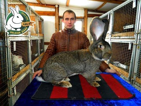 Разведение кроликов содержание