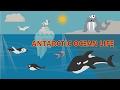 Antarctic Ocean Life for Kids   Learn & Fun for Kids   Cartoon for Children