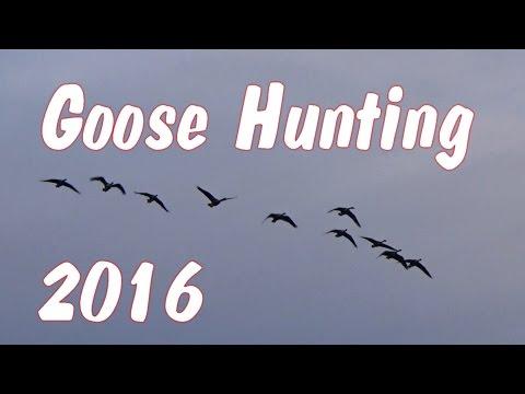 Early Season Goose Hunting Pennsylvania 2016