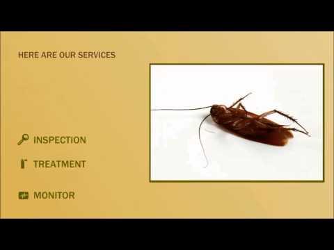 Exterminator Scorpion Az Ahwatukee