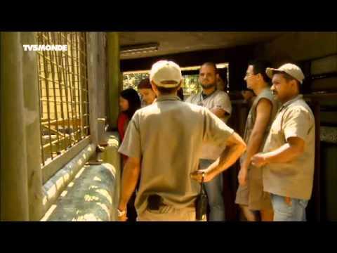 LES ANIMAUX STARS DES ZOOS Le zoo de São Paulo TV5 Monde 2015 07 19 14 00