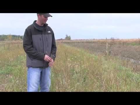 How to do a Smooth Brome Grass Renovation Project