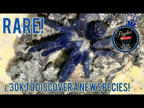 £30k-to-discover-a-new-species!