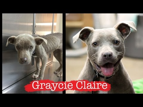 Graycie Claire - How the Internet saved a little dog