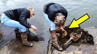 Женщина бросилась в воду на помощь собаке, но то что она увидела не ожидал никто