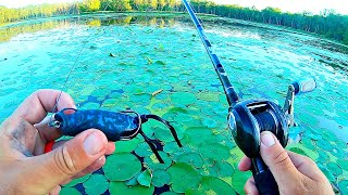 Fishing New Topwater Frog for ANGRY Bass in the Pads!!!