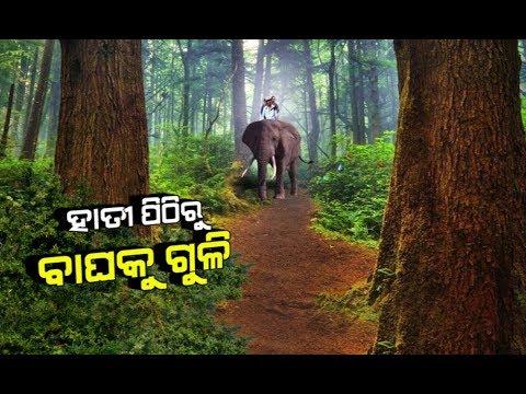 Damdar Khabar: Operation Sundari Start To Catch Sundari Tigress