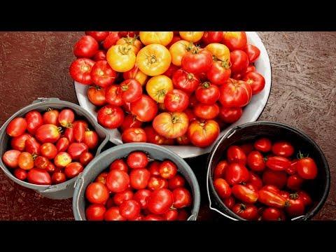 Вопрос: Как подкормить овощные культуры йодом?