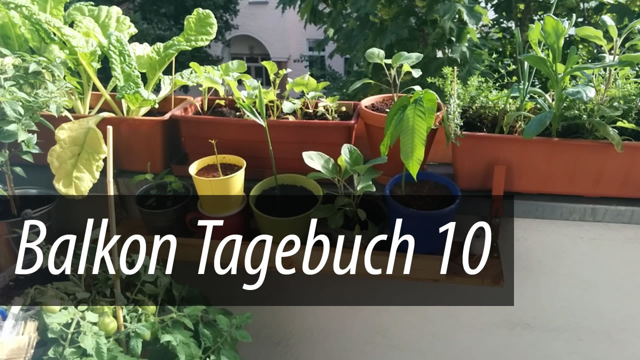 Geliebte Balkon Tagebuch 10 - Paprika, Bohnen und Möhren kommen - YouTube #FK_07
