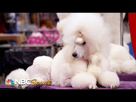 National Dog Show 2019: Go backstage with Tara Lipinski, Johnny Weir and Mary Carillo | NBC Sports