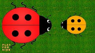 Video with ladybird  ✿ Видео с божьими коровками ʕ•͡ᴥ•ʔ