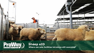 Sheep eID - Where can sale facilties introduce eID scanning?