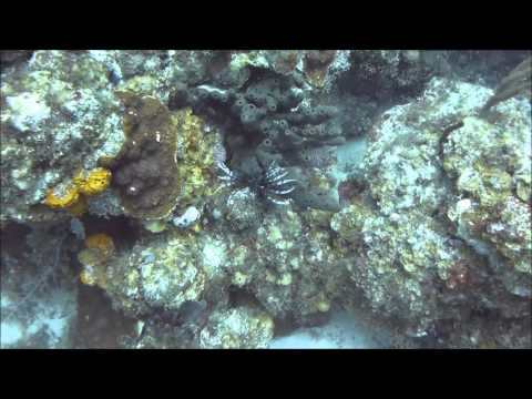 Dive BVI Pelican Island 26-12-2012
