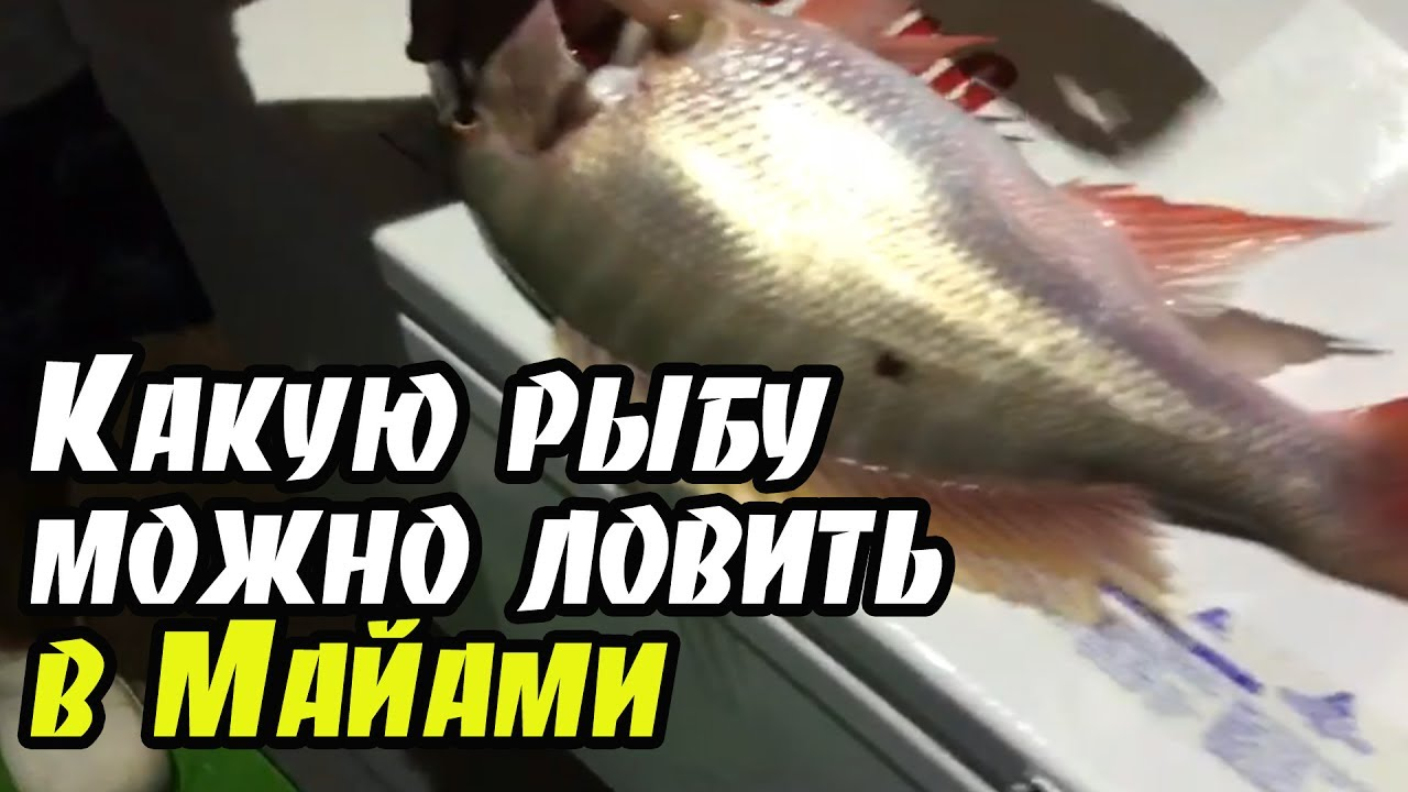 какую рыбу можно ловить на технопланктон