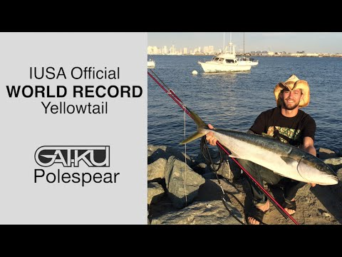 Yellowtail World Record with a Pole Spear ! - GATKU Spearfishing Videos