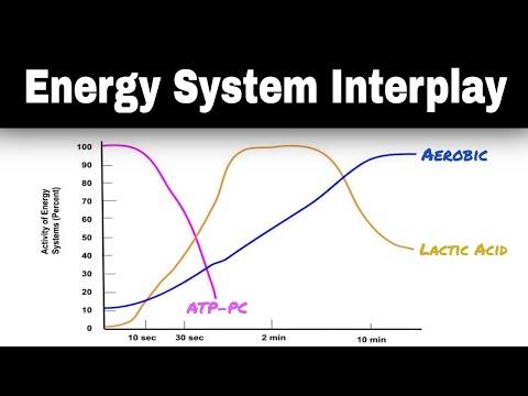 Energy System Interplay Explained (Energy Continuum) | PE Buddy