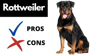 Rottweiler Pros And Cons | The Good AND The Bad!!