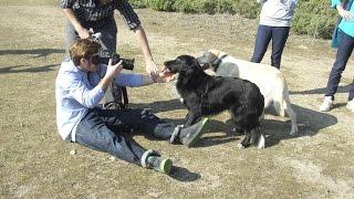 Garde d'animaux entre particuliers, tournage de la vidéo Animal Futé