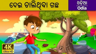 ଦେଇ ଚାଲିଥିବା ଗଛ | Giving Tree in Odia | Odia Story | Fairy Tales in Odia | Odia Fairy Tales