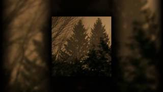 Above The Earth - If These Trees Could Talk