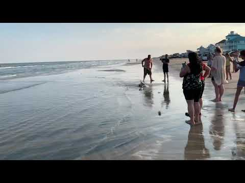 Man Nearly Bitten By Blacktip SHARK!! At Galveston Beach!!