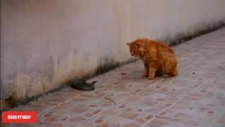 Điều gì xảy ra khi bỏ Rắn và Chó Mèo ở chung