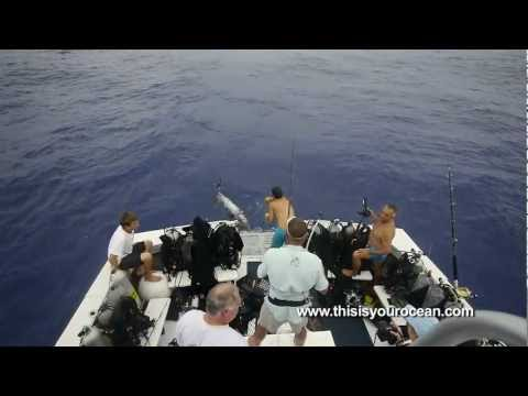 The Raw Power of the Oceanic White Tip Shark
