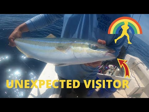 UNEXPECTED VISITOR show up 80 miles OFFSHORE in the GULF of MEXICO (OFFSHORE FISHING)