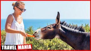 Кормим диких осликов на самой узкой части Кипра Тревел Влог