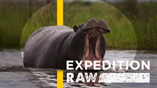 Close Call: When a Hippo Flips Your Boat | Expedition Raw