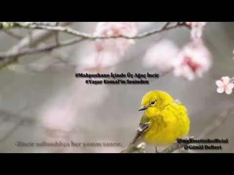 Yaşar Kemal Mahpushane Önününde Üç Ağaç İncir Kendi Sesinden
