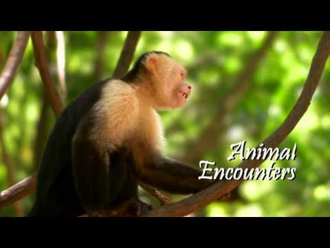 Honduras: Animal Encounters