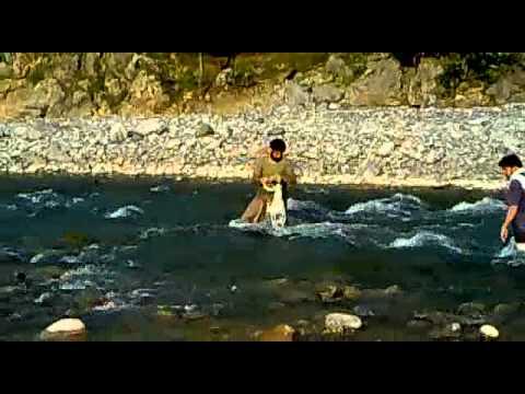 Fish hunting bherkund mansehra beautifull hazara Pakistan.